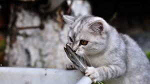 6963895-funny-cats-wallpaper