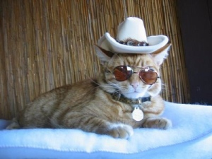 crazy-cat-fashions-sheriff-style-large-msg-1289331919051