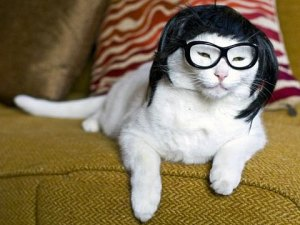 funny-cats_169