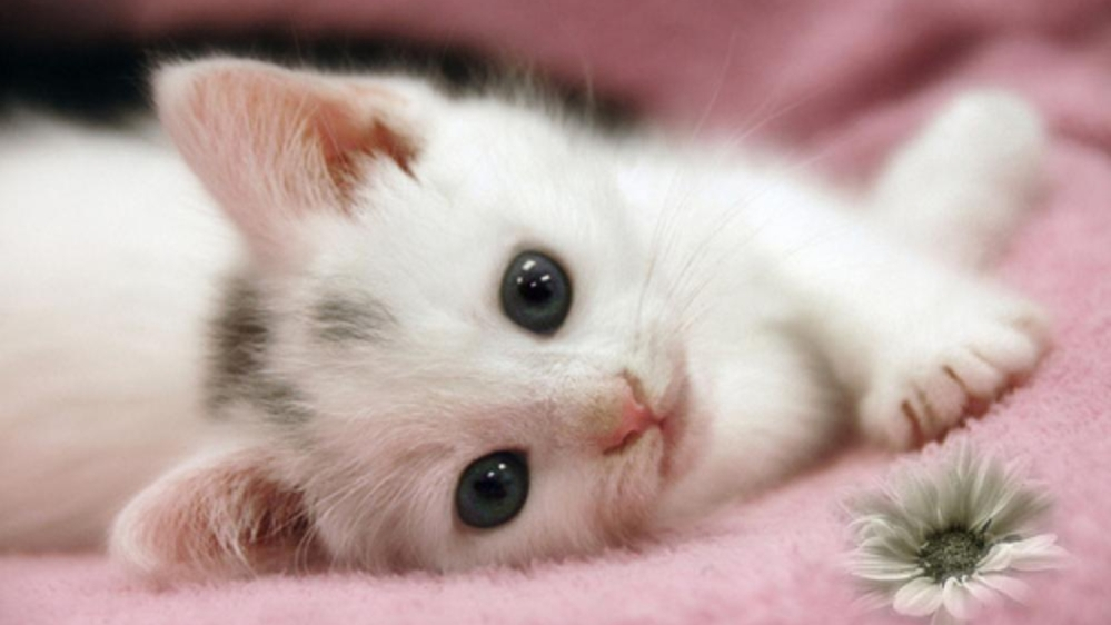 cute-kitten-wallpaper-free-6915850