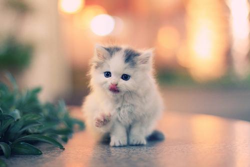 cute-kittens-1