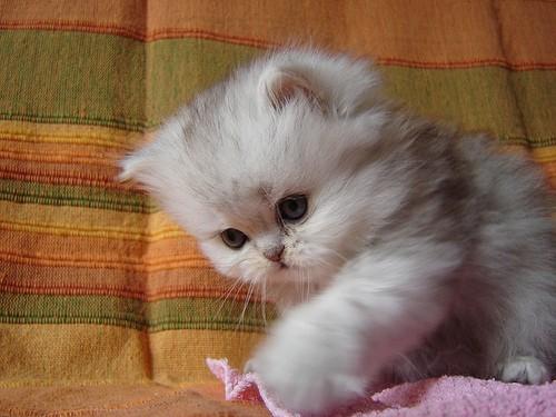 cute-kittens-12