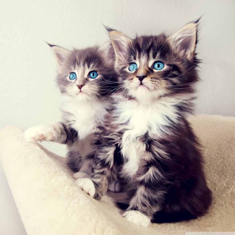 cute_kittens-wallpaper-1024x1024