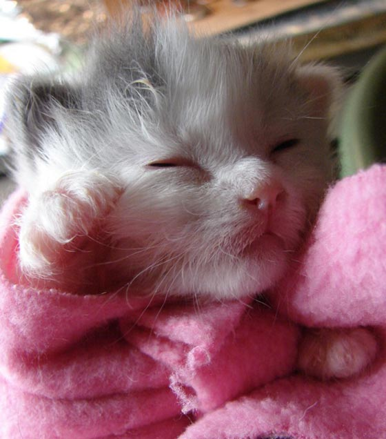 cute_kittens_1