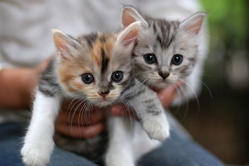 cutest-kittens-500