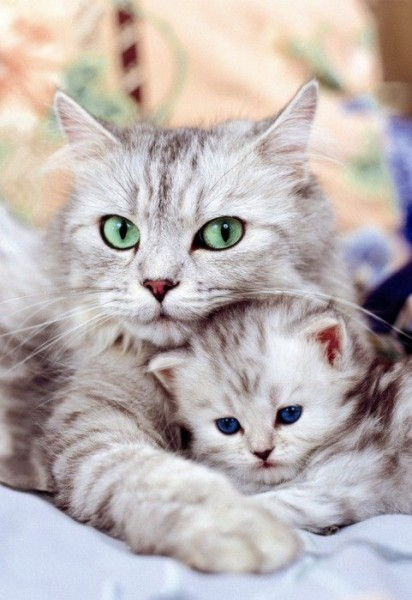 cutest-kittens-ever-right-412x600