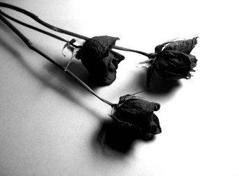 why-me-rose-dried