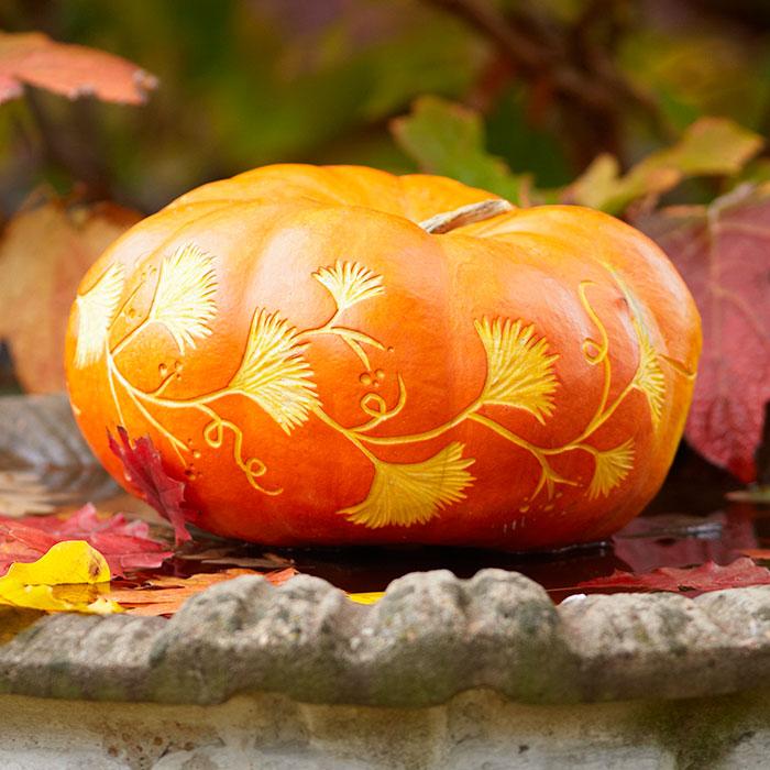 pick-a-better-pumpkin-102018232